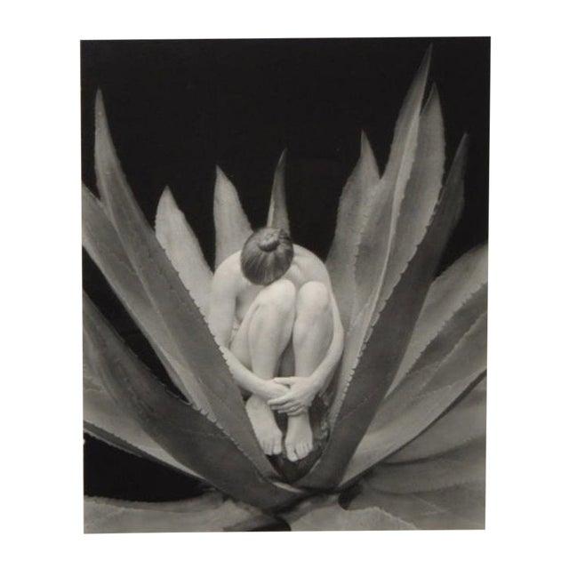 Kim Weston Black and White Photograph c.2001 - Image 1 of 2