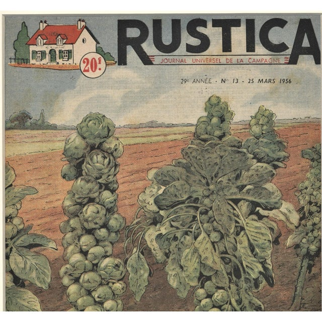 French Country Matted French Mid-Century Country Kitchen Art-Vegetables-Brussels Sprouts For Sale - Image 3 of 5