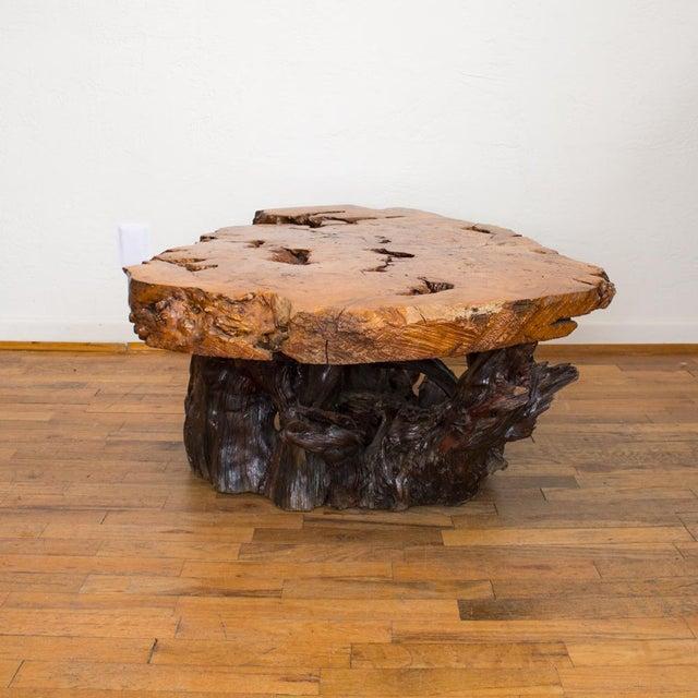 Live Edge Maple Burlwood Coffee Table For Sale - Image 4 of 11