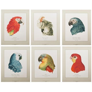 Large 16-18th C. Parrot Head Study Prints - Set of 6 For Sale
