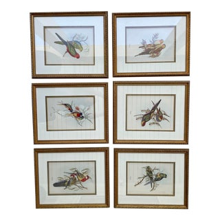 Mid 20th Century John Gould Exotic Birds Prints, Framed - Set of 6 For Sale