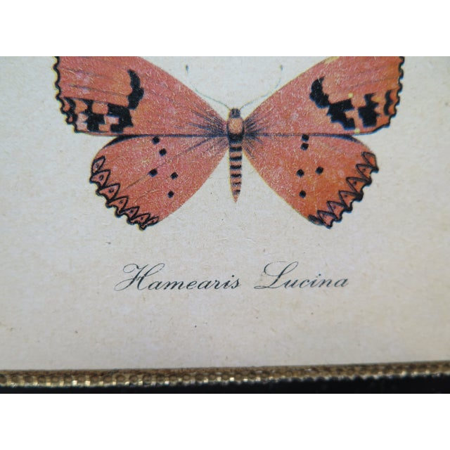 Beautiful Vintage Butterfly Wood Wall Hanging or Plaque Edge of piece Gold then Black with Orange Butterfly Hamearis...
