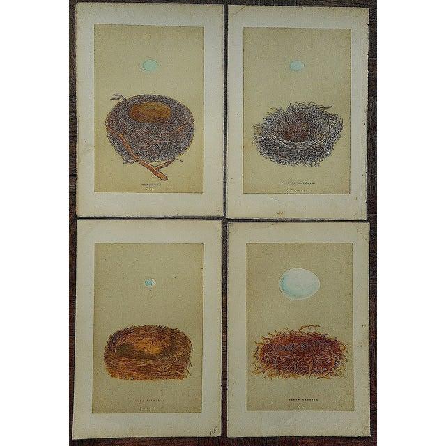 Antique Morris Nest & Egg Prints - Set of 4 - Image 2 of 6