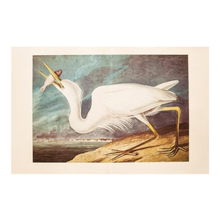 1966 Vintage Cottage Lithograph of White Heron by John James Audubon For Sale