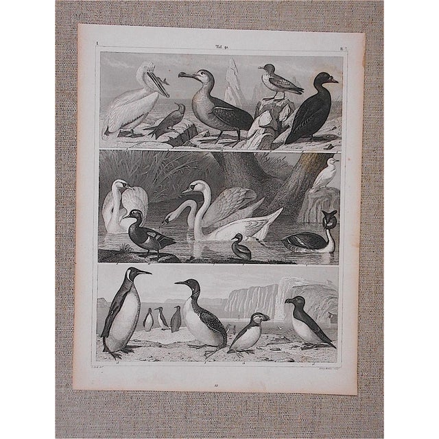 Antique Lithograph-Birds - Image 3 of 3