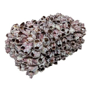 Barnacle Cluster Box For Sale