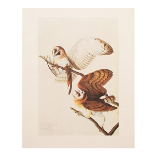 1966 John James Audubon Barn Owls Lithograph For Sale