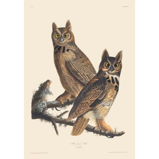 John James Audubon Print, Great Horned Owl For Sale