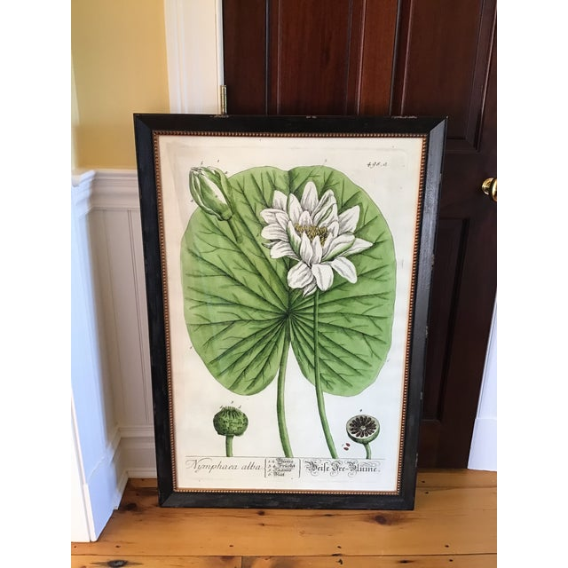 Large Turpin Pierre Chaumeton Flore Medicale Print, Framed For Sale - Image 12 of 13