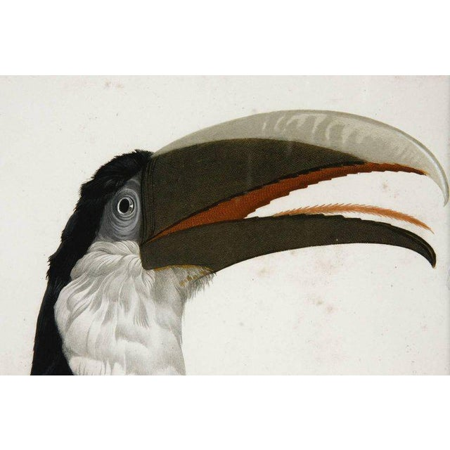 Victorian Pair of Colored Ornithological Engravings After Jacques Barraband For Sale - Image 3 of 13