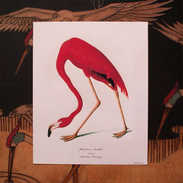 Paper American Flamingo by John James Audubon, Large Reproduction Print For Sale - Image 7 of 9