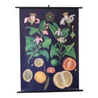 Botanical German Educational Chart