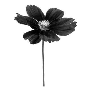 Black Botanical 31 Photograph For Sale