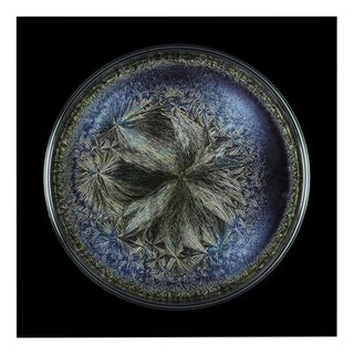 "Seb Janiak ""Morphogenetic Field - Beluga caviar (Large)"", Photograph For Sale"