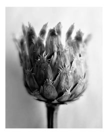 Image of Black and White Photography Prints