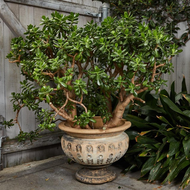 Terra Cotta Planter With Flared Rim From 19th Century England For Sale - Image 10 of 11