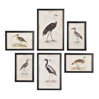 Kenneth Ludwig Chicago Waterfowl Gallery Prints - Set of 6 For Sale