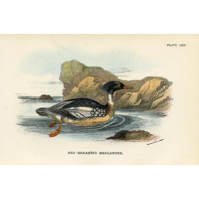 English 1890s British Shorebird Prints, Pair For Sale - Image 3 of 5