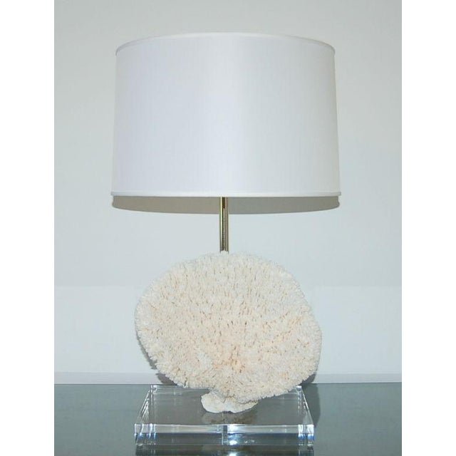 Beautiful Table Coral specimen harvested in the 1970s, mounted on a thick rectangle of Lucite and made into anaboe lamp....