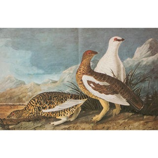 1966 Cottage Print of Rock Ptarmigan by Audubon For Sale
