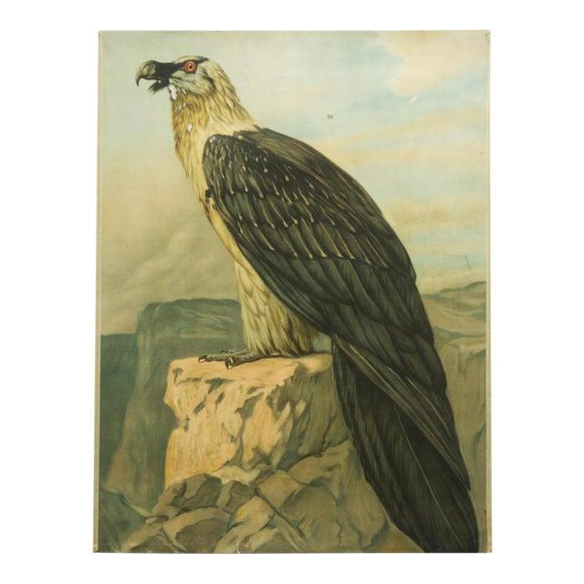 German vintage eagle school poster For Sale