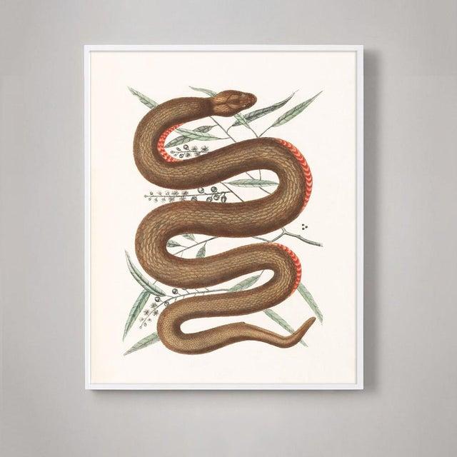 Illustration Vintage Woodland Snake Print - 16 X 20 For Sale - Image 3 of 5