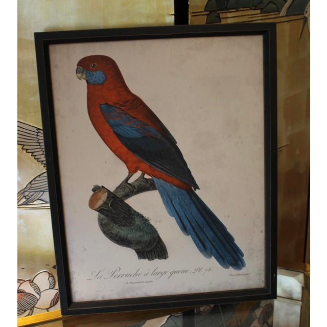 Boho Chic Framed Bird Wall Art Prints Pictures - Set of 4 For Sale - Image 3 of 9