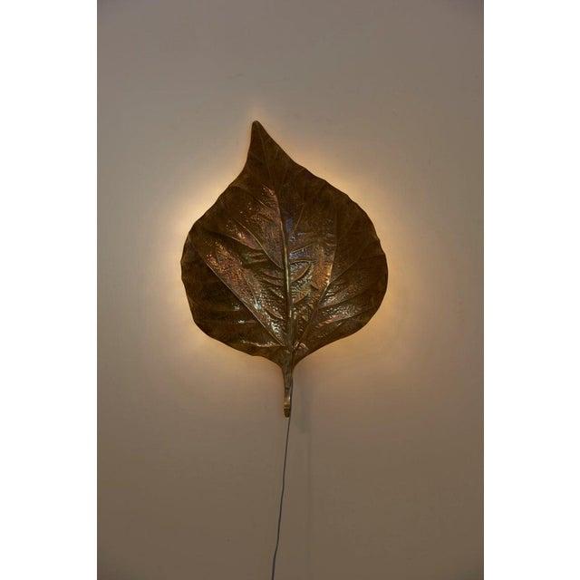1 of 4 Huge Rhaburb Leaf Brass Wall Lights or Sconces by Tommaso Barbi For Sale - Image 10 of 13