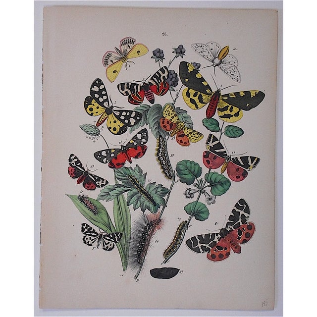 Realism Antique Chromolithograph Butterflies/Moths For Sale - Image 3 of 3