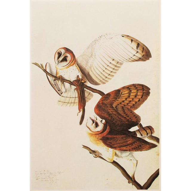 This is an exquisite large vintage reproduction of the original lithographic print of Barn Owls by John James Audubon from...