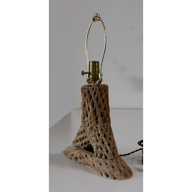 Mid-Century Modern Cholla Cactus Lamp For Sale - Image 3 of 5