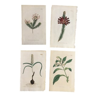 Set of Four William Curtis Hand-Colored Engravings of Botanical Studies For Sale