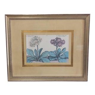 Crispin De Passe Auricola Framed Print For Sale
