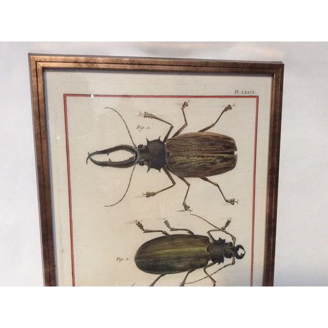 Six Framed Scientific Bugs & Insects Prints - Image 2 of 3