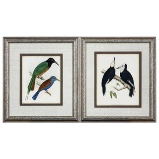 19th Century Framed Ornithological Bird Prints - a Pair For Sale