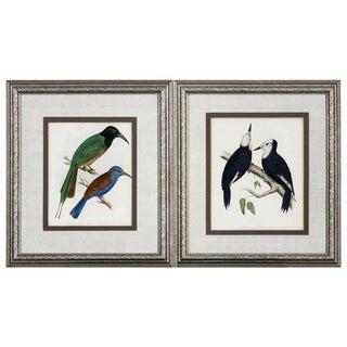 19th Century Framed Ornithological Bird Prints - a Pair For Sale