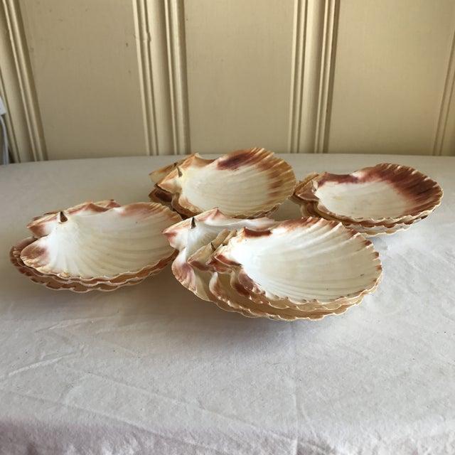 Natural Sea Shells - Set of 15 - Image 8 of 11