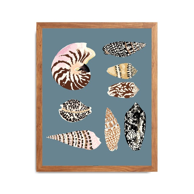 """2020s """"Fiji Shells in French Blue"""" Contemporary Giclee Print by Sarah Gordon For Sale - Image 5 of 5"""