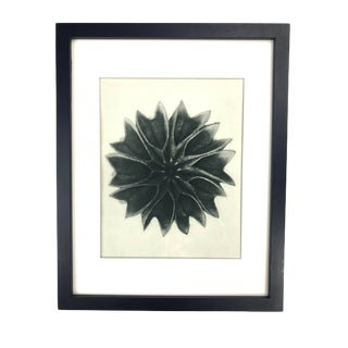 Framed Antique Botanical Blossfeldt Print - No. 63 For Sale