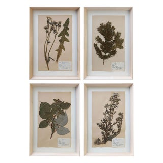 Vintage Swedish Herbaria For Sale