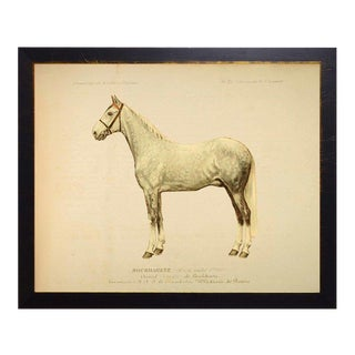 Country Print of Wayland the Horse Bookplate - 18x14 For Sale