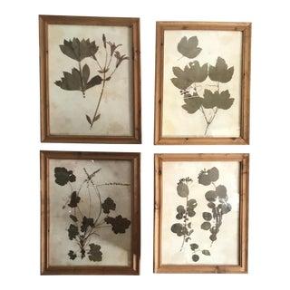 Botanical Prints in Reclaimed Wood Frames - Set of 4 For Sale