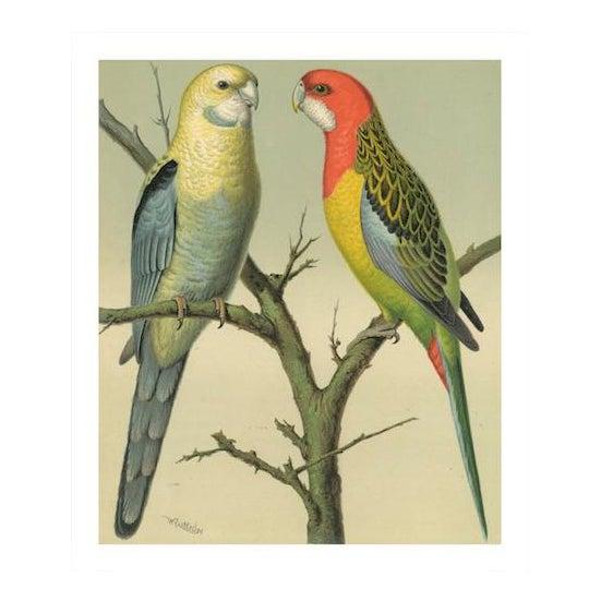 Antique '2 Parrots' Archival Print - Image 1 of 3