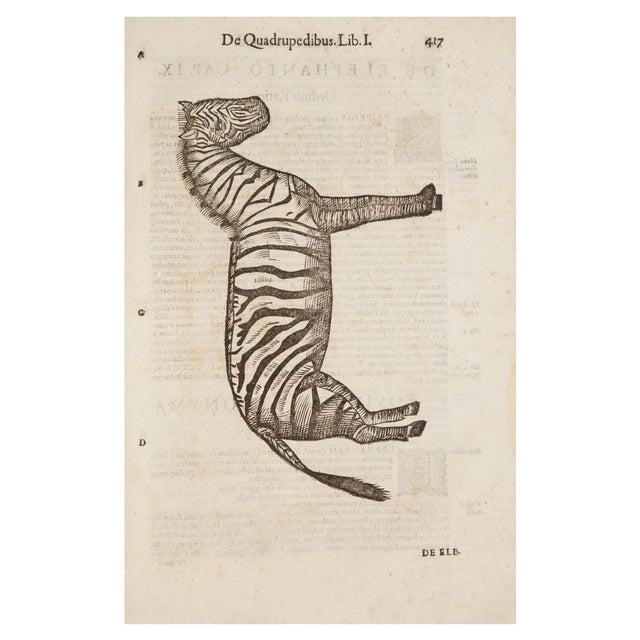 17th Century Illustrated Vellum Book, Ulisse Aldrovandi's De Quadrupedibus Solidipedibus For Sale In San Francisco - Image 6 of 7