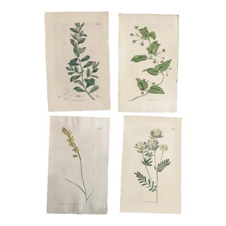 William Curtis 19th Century Hand-Colored Botanical Prints