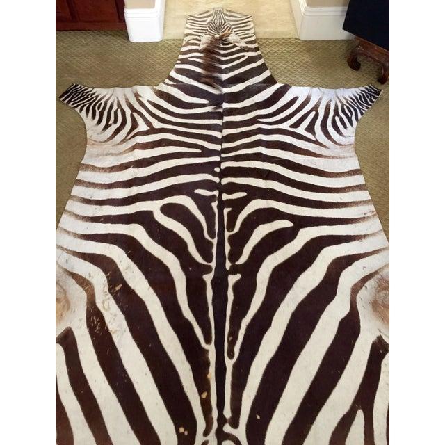 African Burchell Zebra Skin Rug - 5′10″ × 8′9″ - Image 4 of 4