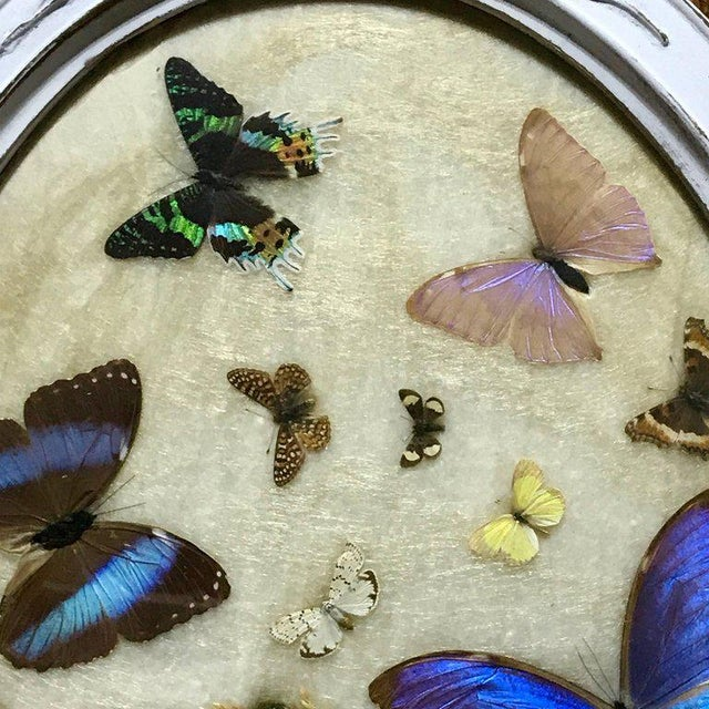 Framed Victorian Butterfly and Insect Taxidermy Plaque | Chairish