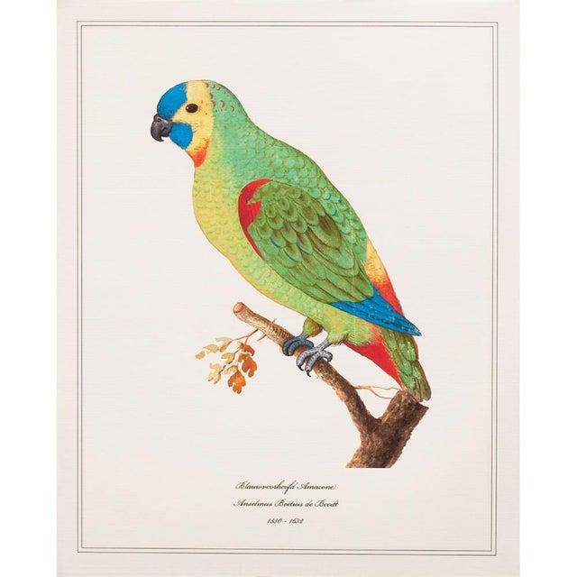 Lithograph 1590s Anselmus Boëtius De Boodt, Parrots - Set of 9 For Sale - Image 7 of 13