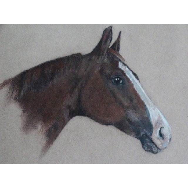Equestrian Race Horse Portrait Drawing - Image 1 of 8