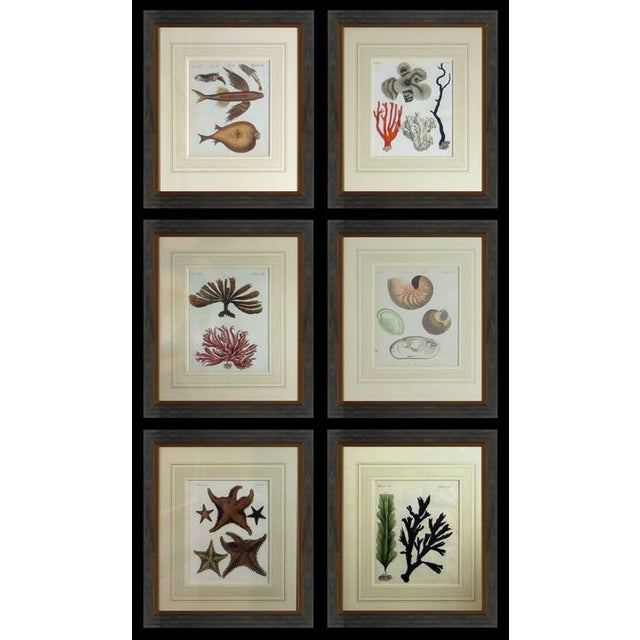 Antique Framed Nautical Engravings - Set of 6 - Image 2 of 8
